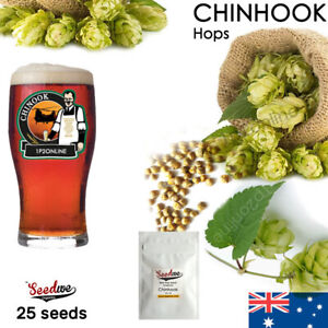 25 Chinhook Beer Hop Seeds American Hops Seed Home Brew Perennial
