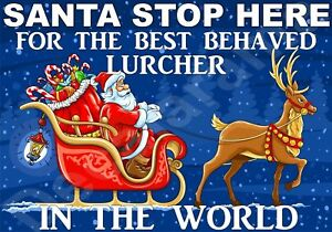 LURCHER Santa Sign - STOP HERE FOR BEST BEHAVED - Novelty Laminated Gift Present