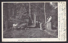 Cedar Rapids-Iowa-Bever Park-Feeding the Deer-Antique Postcard