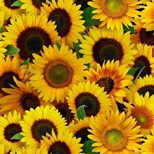 Fabric Flowers Sunflowers Full Elizabeth Cotton 1/4 Yard 487