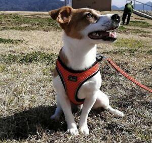 Genuine Hunter Hilo Comfort Lightweight Harness & Lead  3DMesh Puppy/Dog(L)