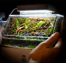 'Mini Complete Tank' Paludarium/Terrarium / Nano Desktop Aquascape Fish Aquarium