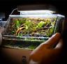 'Mini Complete Tank' Paludarium/Terrarium / Nano Desktop Aquascape Fish Aquarium