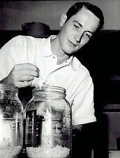 1966 Vintage Photo mice used for cancer study Salk Institute Biological Studies
