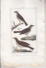 C1 BUFFON Gravure Couleurs ALOUETTE Farlouse VAUTHIER 1828 Oiseaux