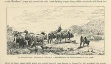 ANTIQUE HIGHLAND FERRY BOAT SCOTLAND MAN KILT COW STEER HERD DOG OLD ART PRINT