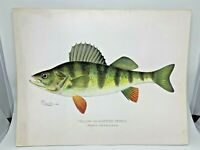 Original Antique Denton Fish Print Yellow Perch Pike
