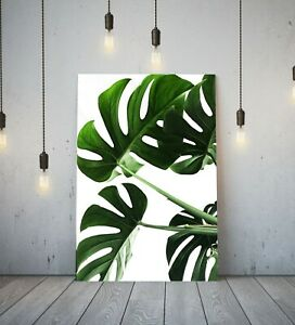 MONSTERA LEAF 5 -DEEP FRAMED CANVAS ANIME WALL ART PICTURE PAPER PRINT- GREEN