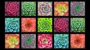 """Succulent Charm Cactus Plant Cotton Fabric Panel  23"""" x 42""""   #597E-BLK"""
