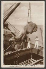 Postcard Aden Yemen a Camel Passenger on Board ship shipping RP by Howard