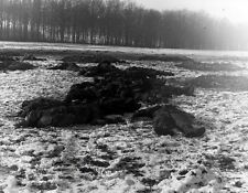 "Battle of the Bulge Dead German Soldiers 8""x 10"" World War II Photo Picture #172"