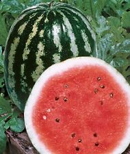 "Organic Non-Gmo Watermelon ""Crimson Sweet 15+ seed 25 Lb Flesh is dark red sweet"