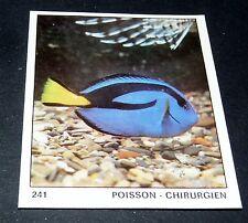 N°241 POISSON CHIRURGIEN PANINI 1970 TOUS LES ANIMAUX EDITIONS DE LA TOUR