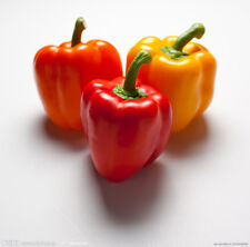 NEW~SEEDS PEPPER~US SHIPPING~USPS FIRST CLASS MAIL~FREE SHIPPING