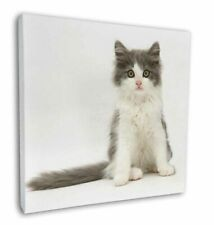 "Cute Grey and White Kitten 12""x12"" Wall Art Canvas Decor, Picture Pr, AC-183-C12"