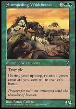 4x Carica di Gnu - Stampeding Wildebeests MTG MAGIC Vi Visions Eng/Ita