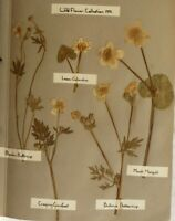 Dried flowers from 1936 an incredible collection amazing detail 100's per album