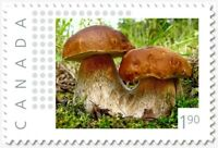 SIAMESE MUSHROOMS = 1.90 rate = Picture Postage MNH Canada 2019 [p19-05s02]