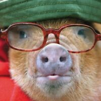 Pig In Glasses Happy Father's Day Greeting Card Paper House Photographic Cards