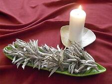 20g Weißer Salbei White Sage Salvia Apiana Indianersalbei