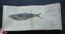 THE HERRING : Its Natural History & National Importance / Fishing  Fishes / 1864