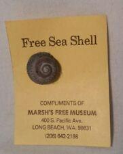 Marsh's Free Museum Vintage Free Sea Shell, Long Beach, Wa