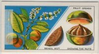 Brazil Nut Are In Pods That Resemble Oranges Vintage Trade Ad Card