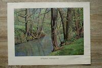Kunst Druck 1900 H Duphorn - Frühlingswald Bachlauf Bäume Wald Natur 28x40cm