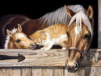 Oil Painting HD Canvas Print Picture Animal Horse and Cat on canvas L486