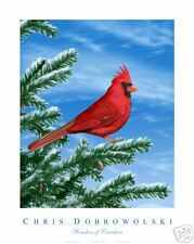 "NEW! Cardinal 16x20"" Art Print Poster by Dobrowolski"