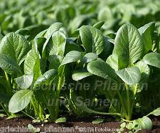 🔥  Griechischer Spinat 100 frische Samen Wintergemüse gesundes Gemüse