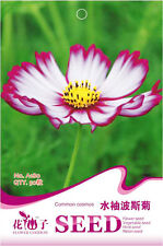 Original Package 50 Common Cosmos Seeds Long Sleeves Calliopsis Flowers A180