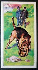 BLOODHOUND  Police Sniffer Dog     Original Vintage  Coloured Card  VGC