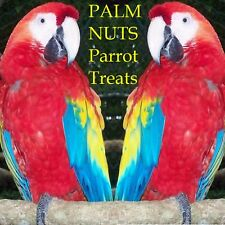 ~PALM NUTS~ Wodyetia bifurcata PARROT MACAW ORGANIC BIG NUTS TREATS 75 Dry SEEDS