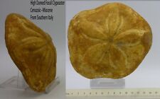 More details for large high domed fossil clypeaster (sea urchin)14 x 12 cm x 4 cm southern italy