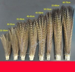 10/50/100/200pcs Beautiful Natural Pheasant Tail Feathers 20-100cm / 8-40inches