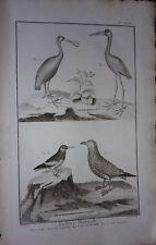 GRAVURE ORIGINALE SUR CUIVRE DE MARTINET 1768 IBIS SPATULE LA PIE DE MER GRISARD