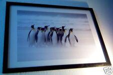 Brutus Ostling Penguins March Photo Poster w/Frame