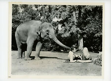 ZEBRA IN THE KITCHEN Original Movie Still 8x10 Animal Trainer R Helfer 1965 5950