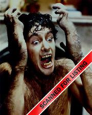 An American Werewolf in London David Naughton transforming 8x10 Photo #7374