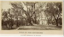 France, Nice et ses Environs, L'Olivier Centenaire de Beaulieu  Vintage alb