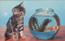 (mri) Postcard: Cat, Curiosity