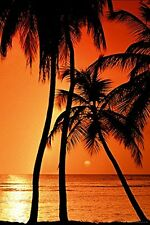 TROPICAL SUNSET - BEACH POSTER 24x36 OCEAN PALM TREES 4634
