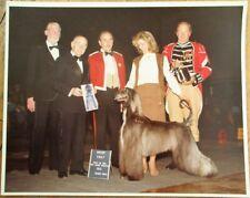 Afghan Hound 1981 Champion Dog Show 8 x 10 Photograph / Photo