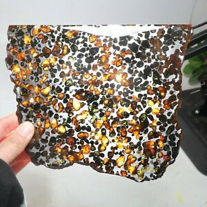 239g Beautiful SERICHO pallasite Meteorite slice - from Kenya C1700
