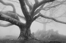 Large Framed Print - Spooky Gothic Tree (Picture Poster Forest Wood Horror Art)