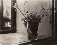 1950's/80 Original Josef Sudek Silver Gelatin Photograph Flower Still Life Czech