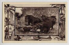 POSTCARD - Hippopotamus by Mintz, artist drawn wild animals African Safari theme