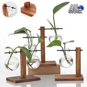 Wooden Stand Glass Flower Vase Hydroponic Hanging Plant Terrarium Container AU