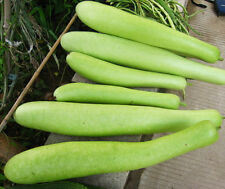 10 Short Bottle Gourd Seeds Gourd Lagenaria Siceraria Organic Vegetable